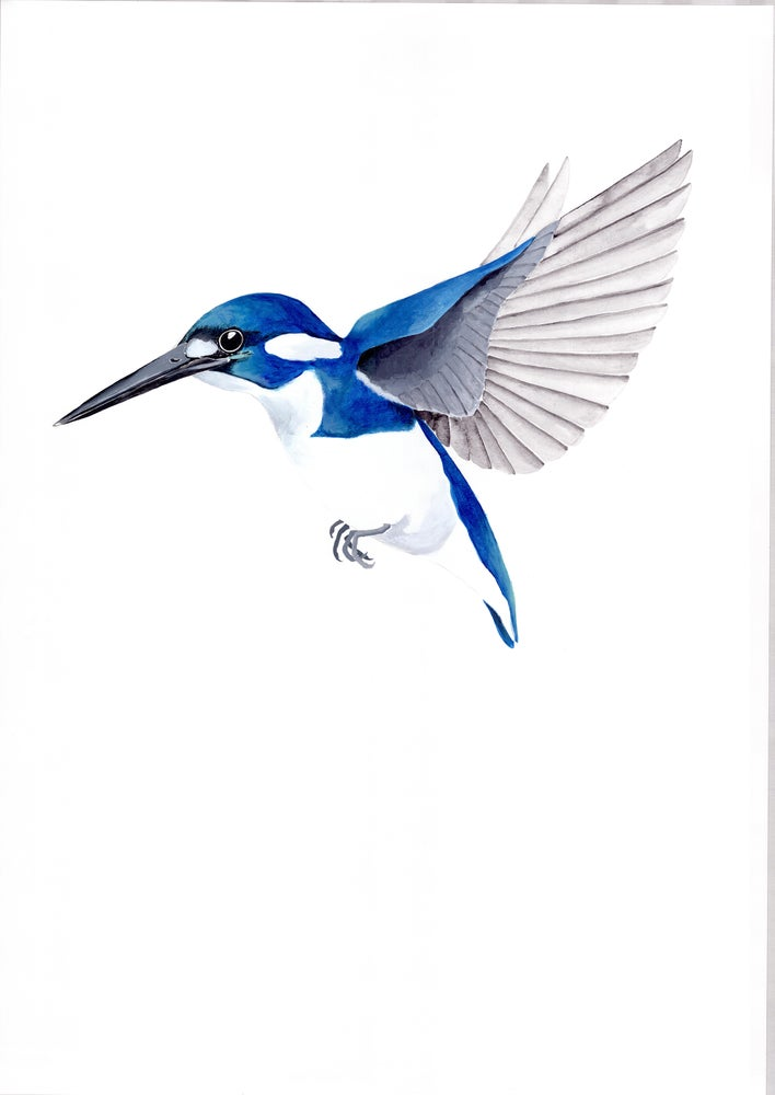 Image of Little Kingfisher - Limited Edition Print