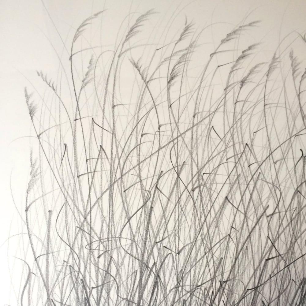 Image of Original graphite drawings - reeds