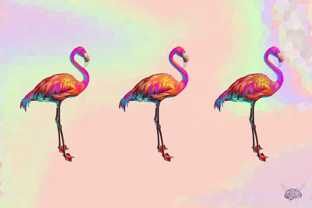 Image of Flamingooo 1