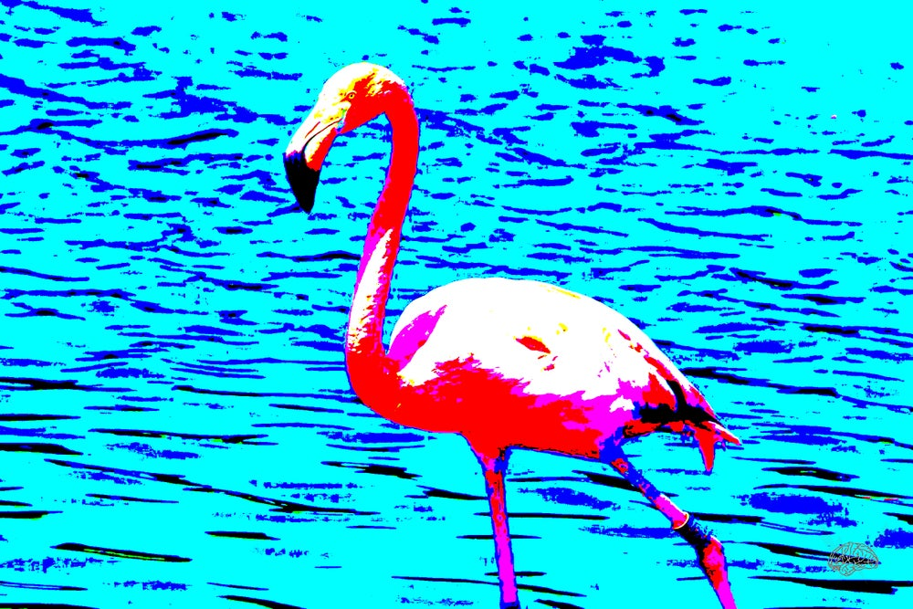 Image of Flamingooo 2