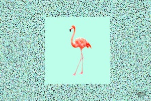 Image of Flamingooo 3