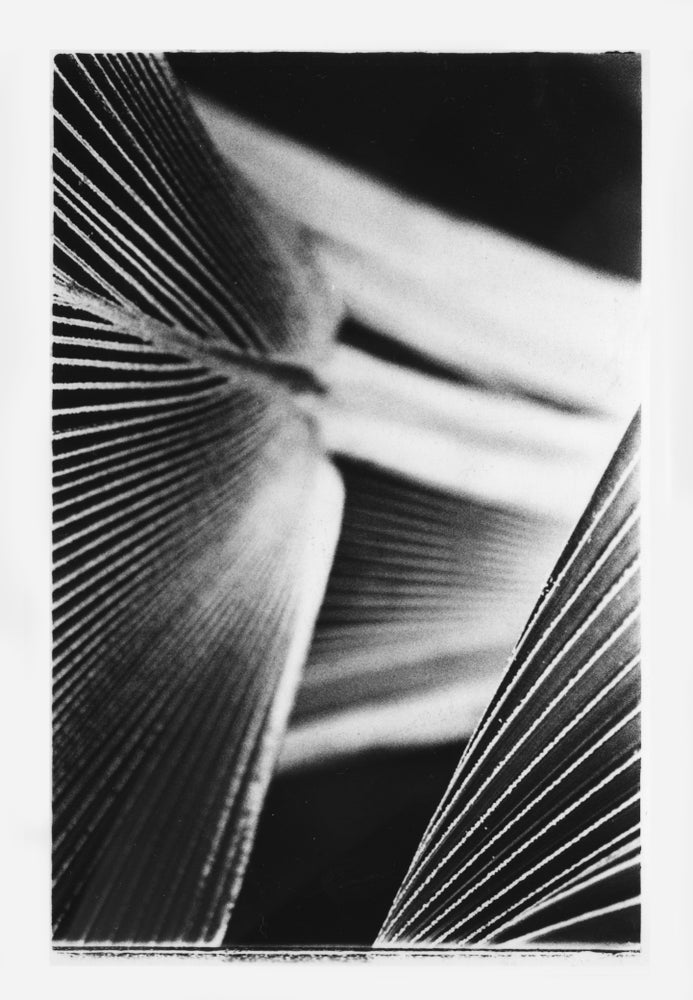 Image of Intimate Undergrowth: 'PALM HOUSE 1'