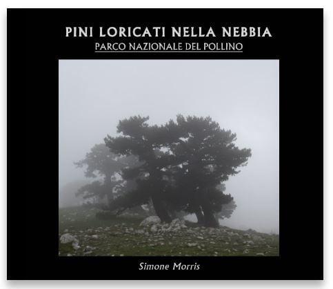 Image of Pini Loricati nella nebbia