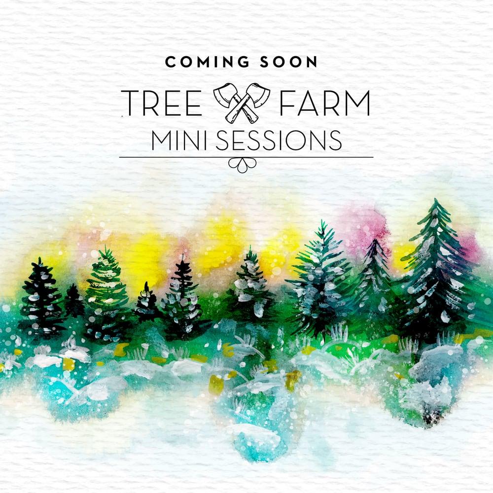 Image of Tree Farm Mini Sessions