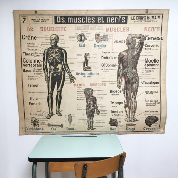 Image of Affiche Scolaire Armand Colin Le Corps Humain