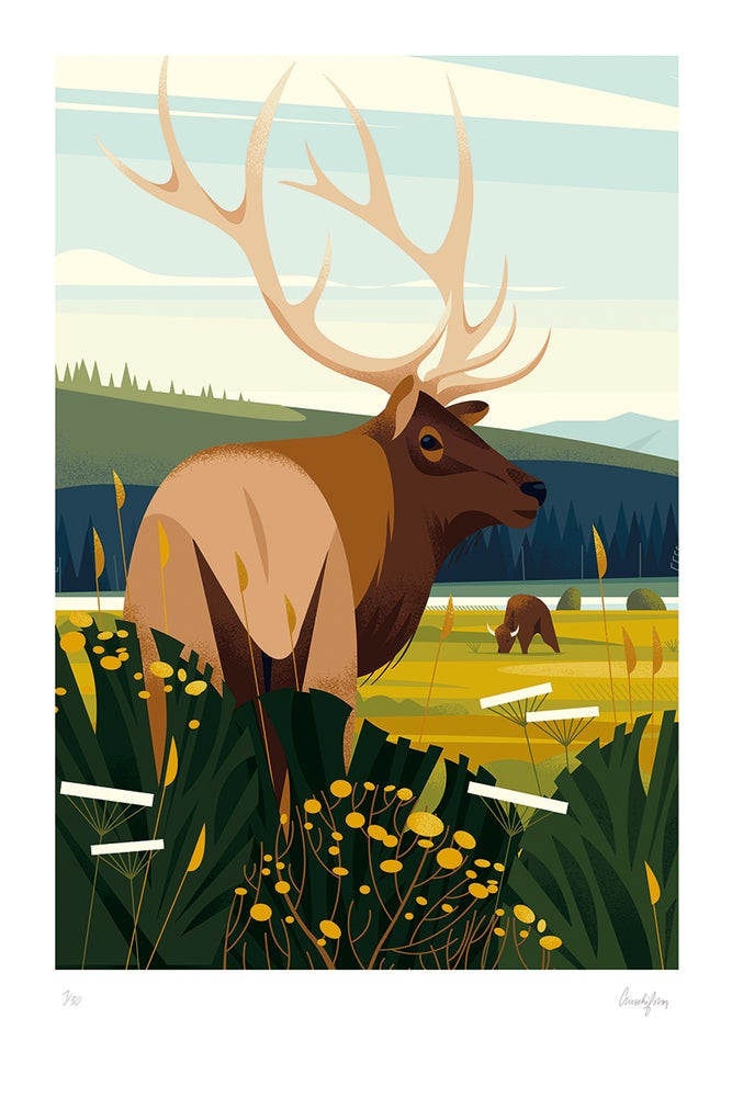 Image of YELLOWSTONE - The great deer