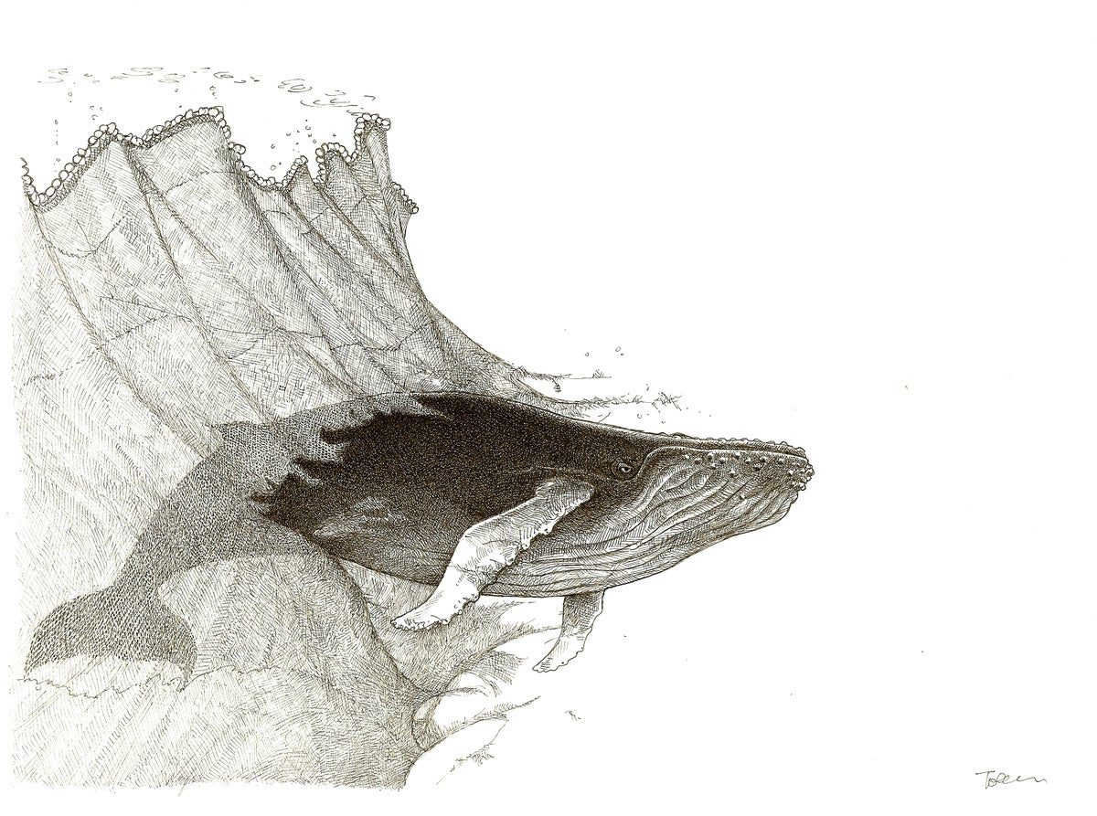"""Image of The Whale Hole 8.5"""" X 11"""""""