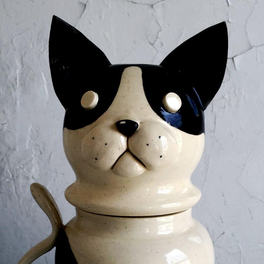 Image of Reggie, the Black + White Cat