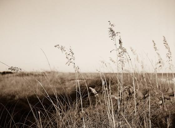 Image of Sepia Calm