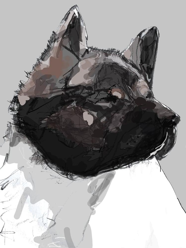 Image of Akita