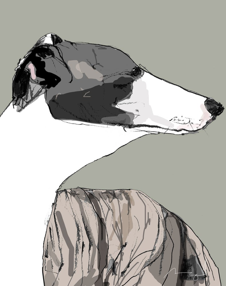 Image of Whippet