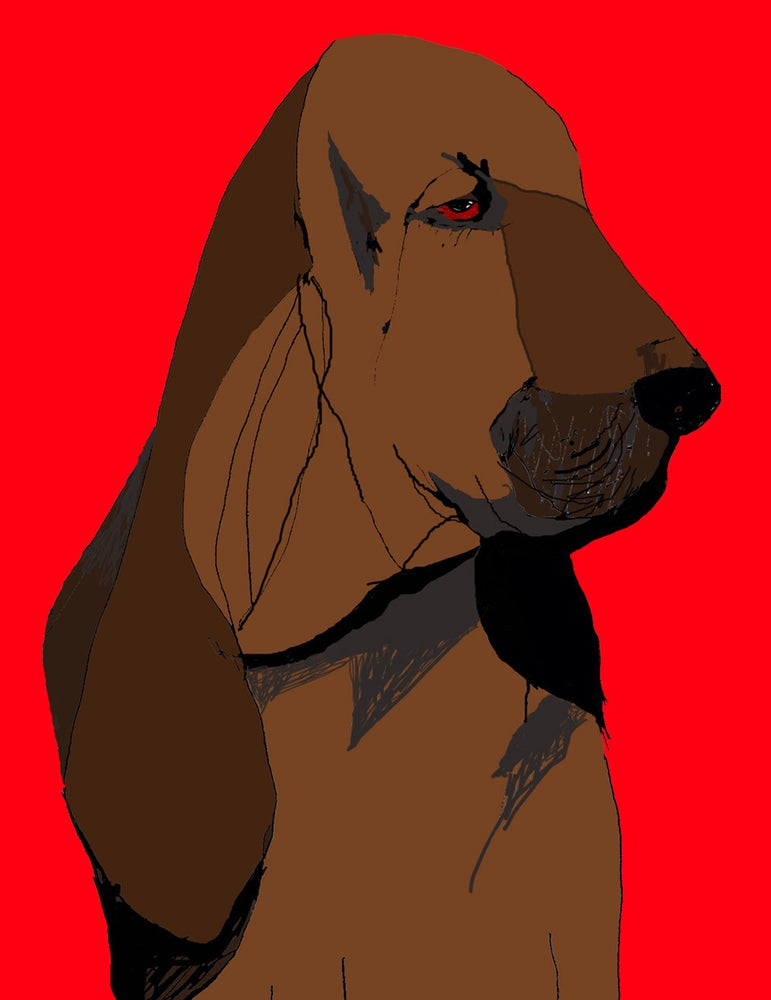 Image of Bloodhound