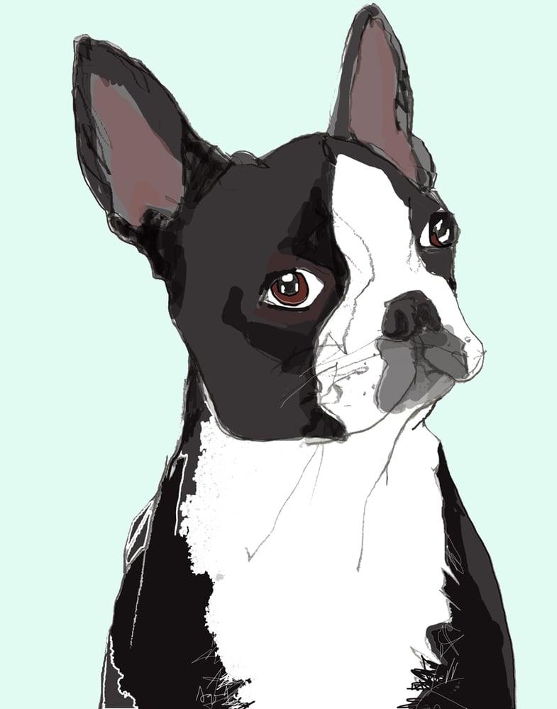 Image of Boston Terrier