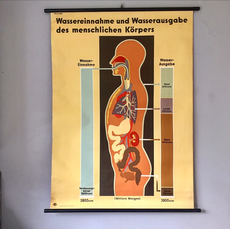 German biology chart