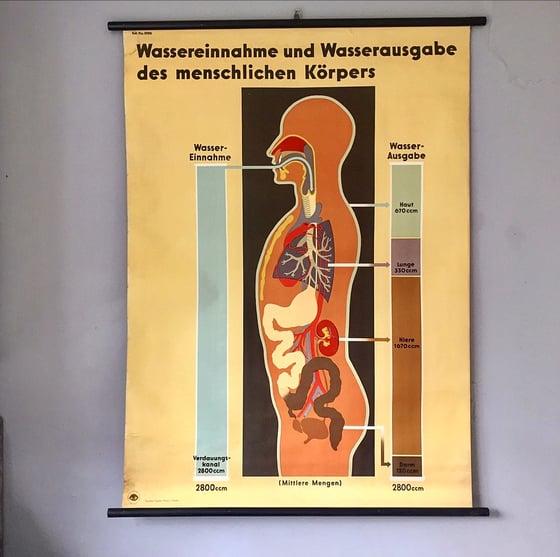 Image of German biology chart