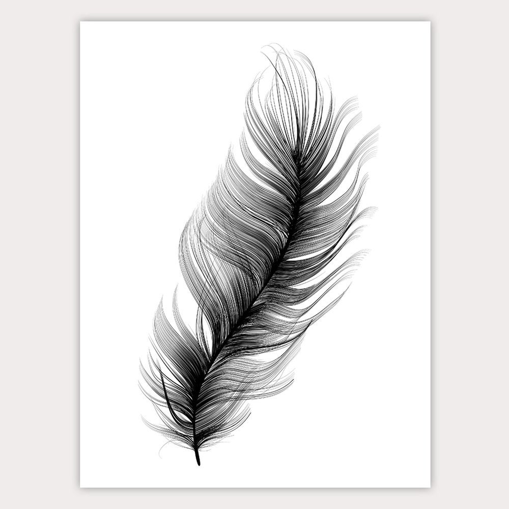 Image of FEATHER 50X70CM