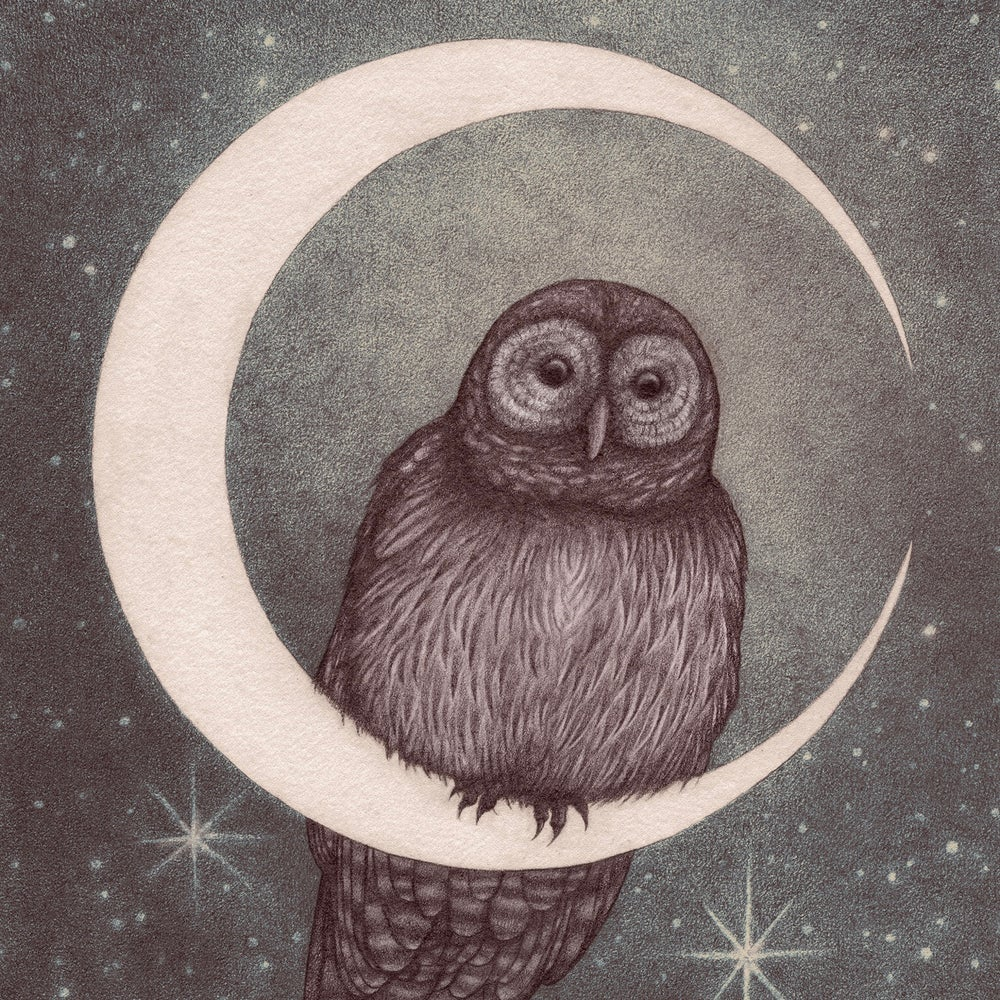 Image of The Owl and the Moon