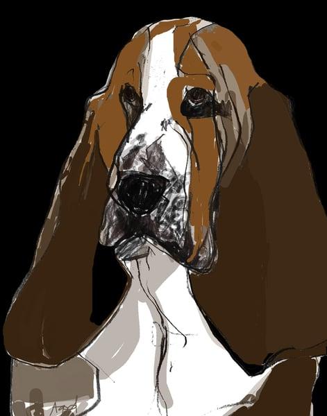 Image of Bassett Hound