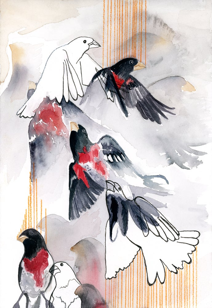 Image of GROSBEAK VISIT: 7X10 INCH LIMITED EDITON PRINT