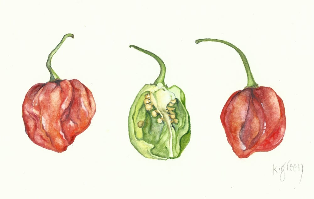Image of Scotch Bonnet Chillies - Original and Greeting Cards