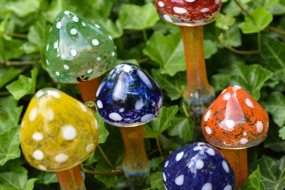 Image of Garden Mushrooms