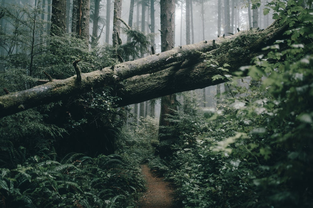 Image of Hiking In Olympic National Park