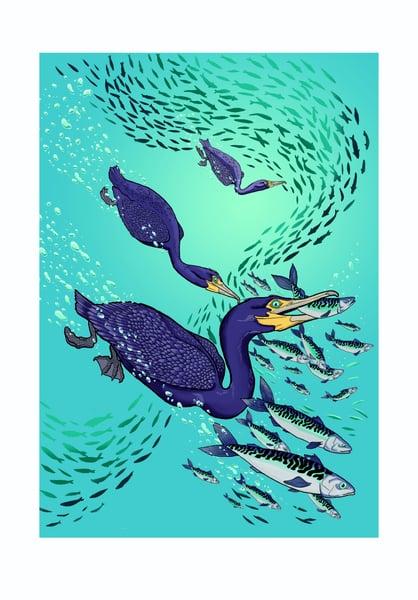 Image of Cormorants dive
