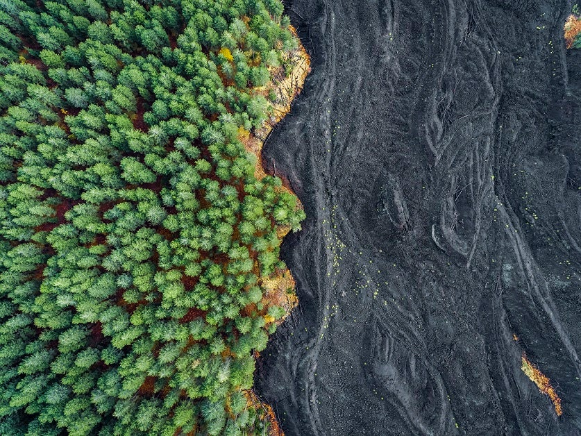 Image of Solidified Lava versus Forest