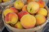 Jamaican Peach