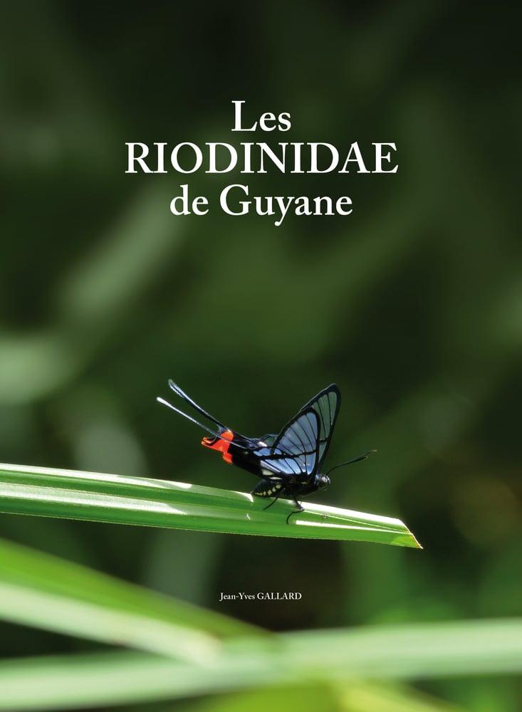 Image of Les Riodinidae de Guyane / French Guyana Riodinids