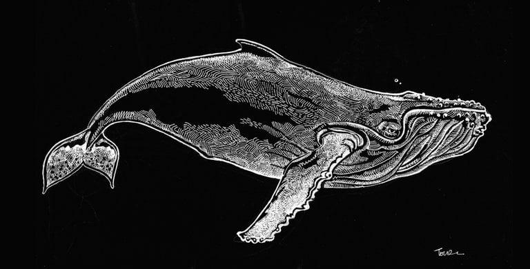 Image of Humpback whale hooded sweatshirt