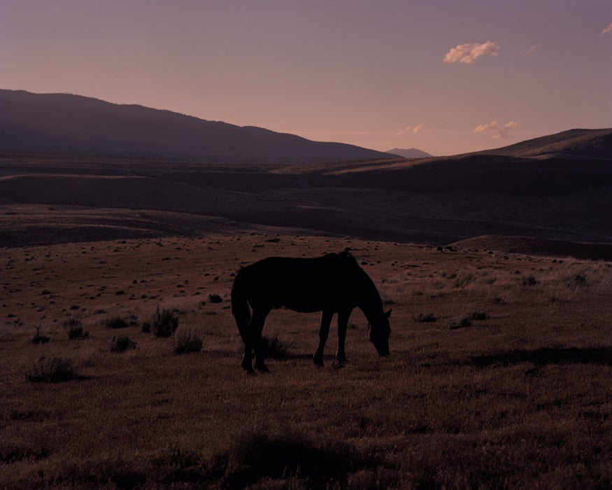 Image of Wild Horse in Washoe Valley (black)
