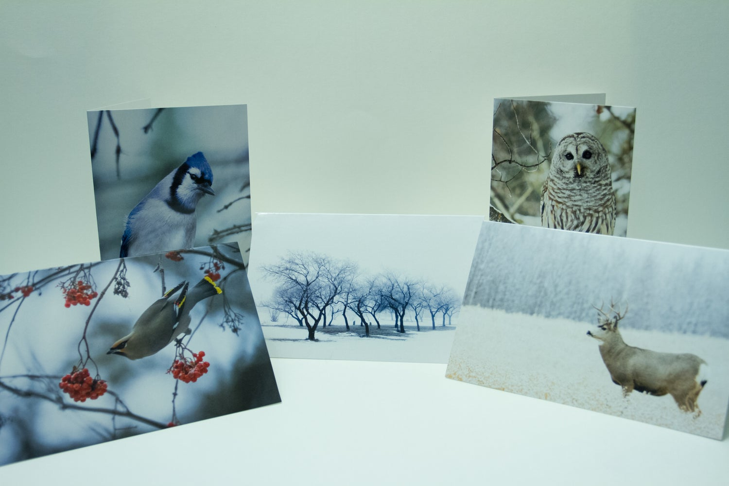 Image of 5 - Blank Holiday Cards