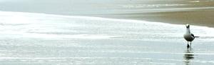 Image of Beach n° 10