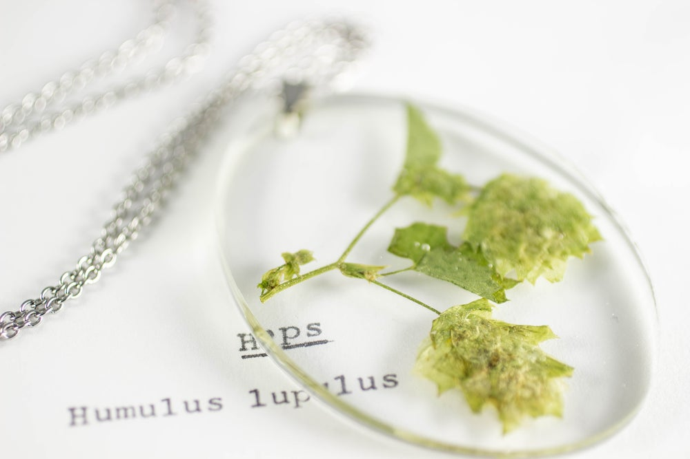 Image of Hops (Humulus lupulus) - Medium Oval #1