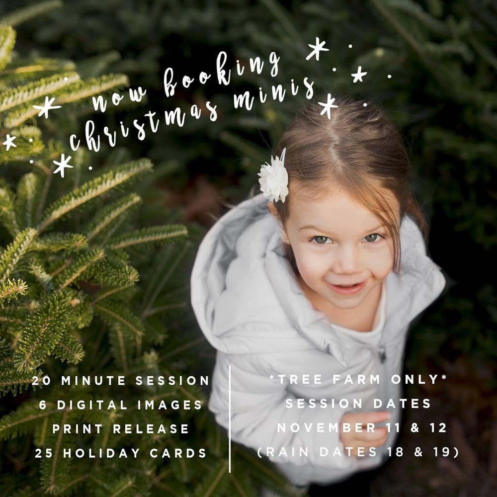 Image of CHRISTMAS TREE FARM MINI'S