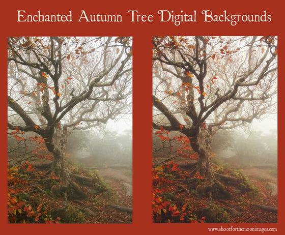 Image of Enchanted Autumn Tree Digital Backgrounds