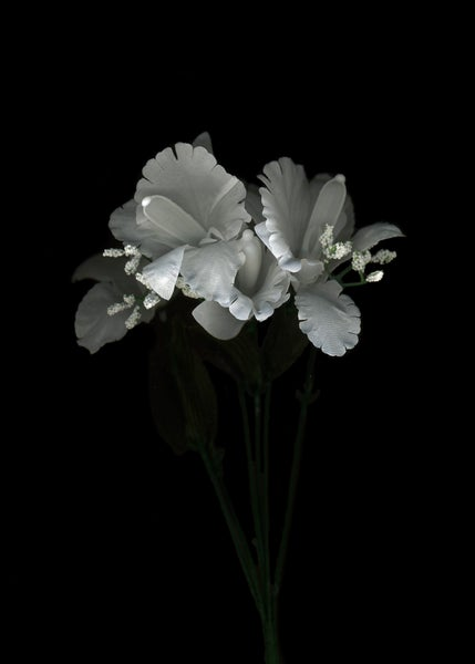 Image of Flowers #4
