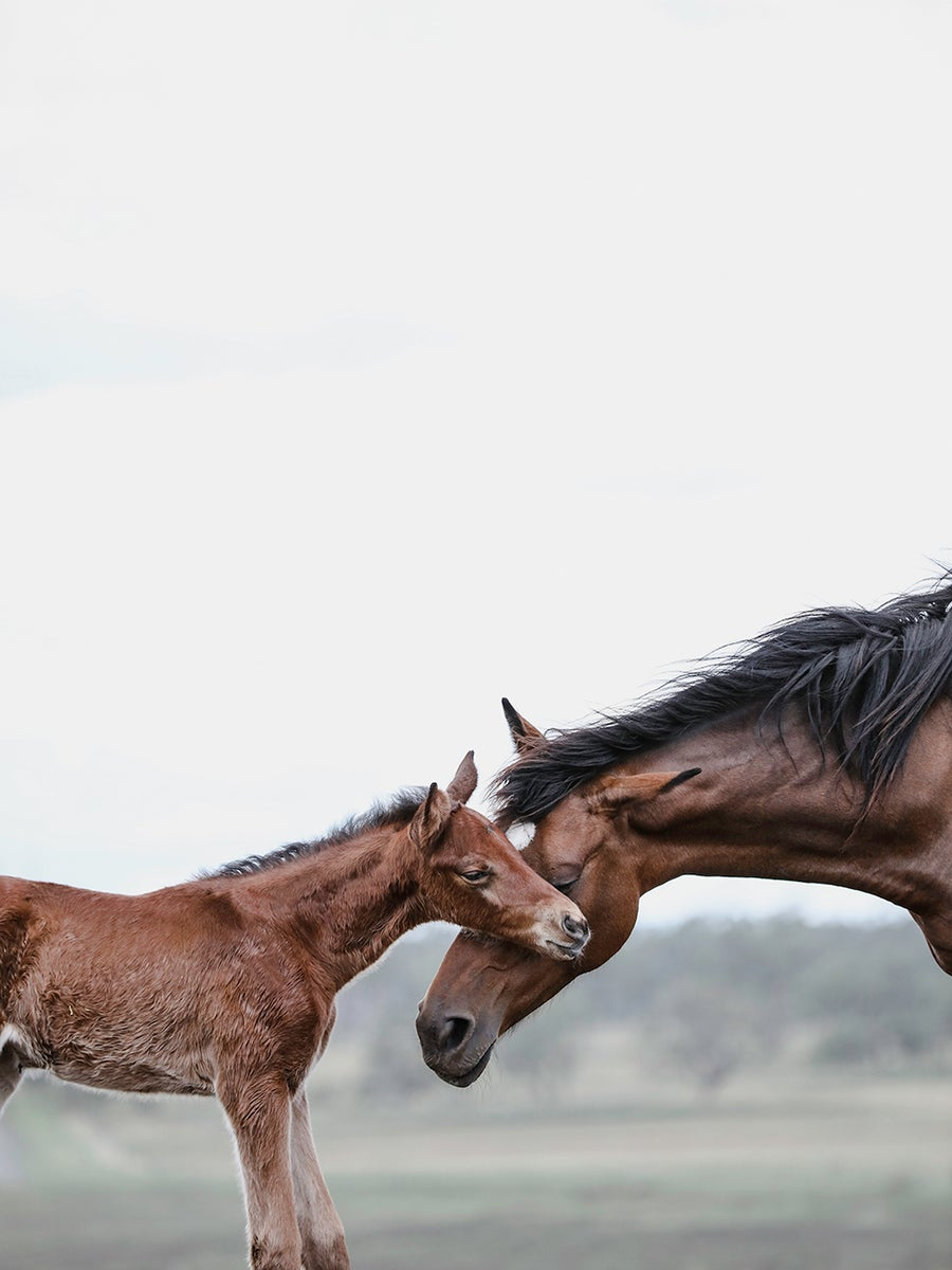 Image of FF Valerie and Foal (c)