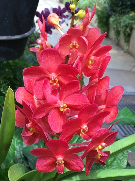Image of Orchids #11-15 (Your choice)