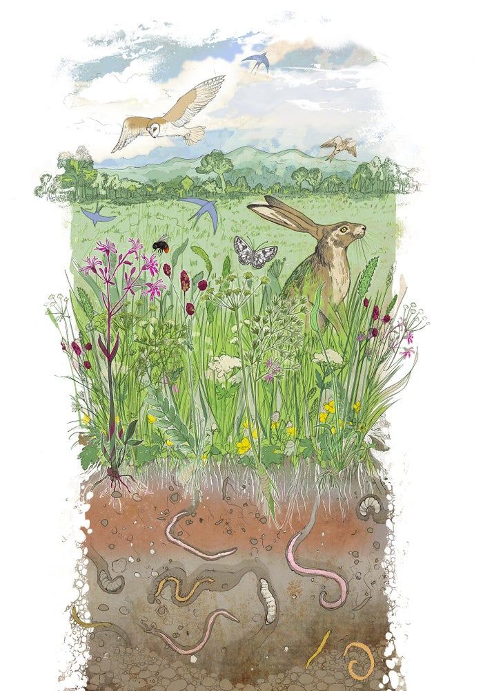 Image of A Worcestershire Meadow