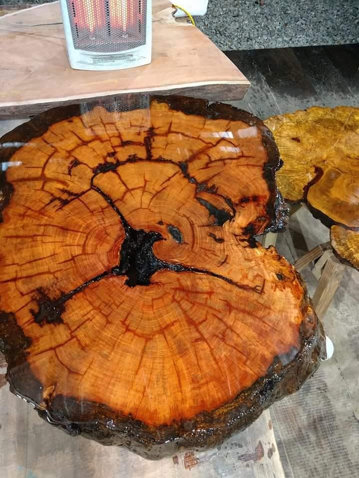 Image of Oldest Recorded Longleaf Pine