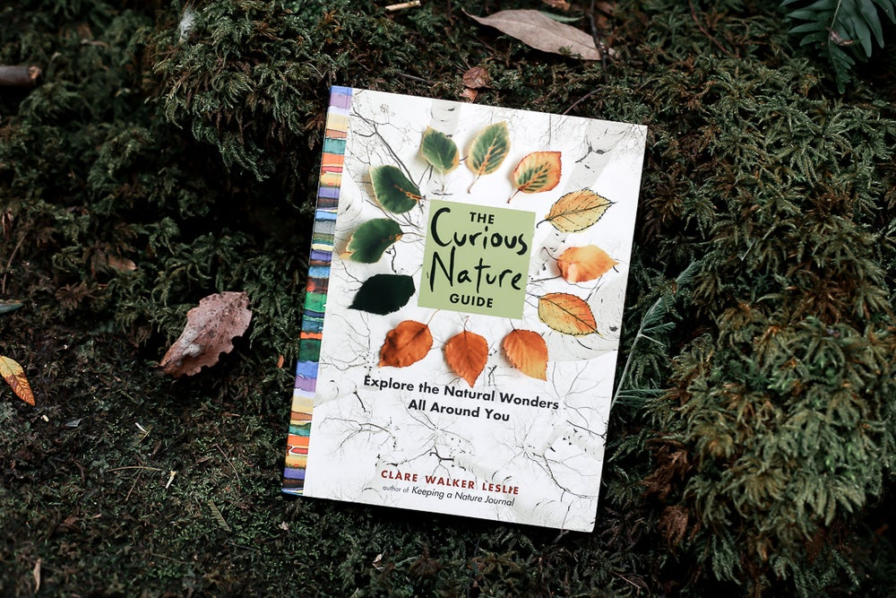 Image of The Curious Nature Guide