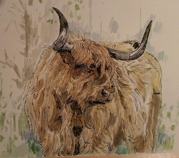 Image of Highland cow on the hunt