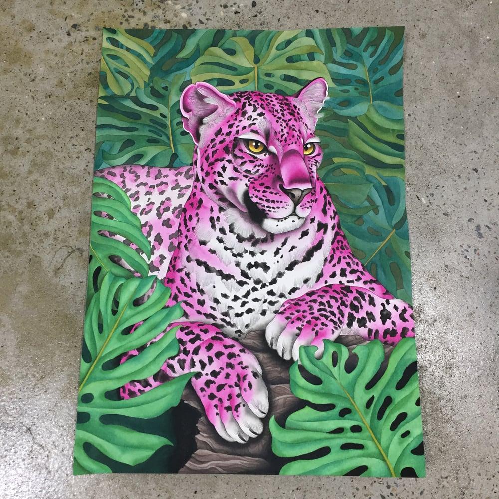 Image of Pink Leopard
