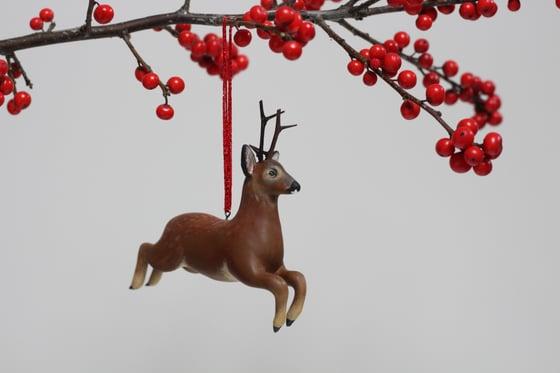 Image of Roe Deer Stag