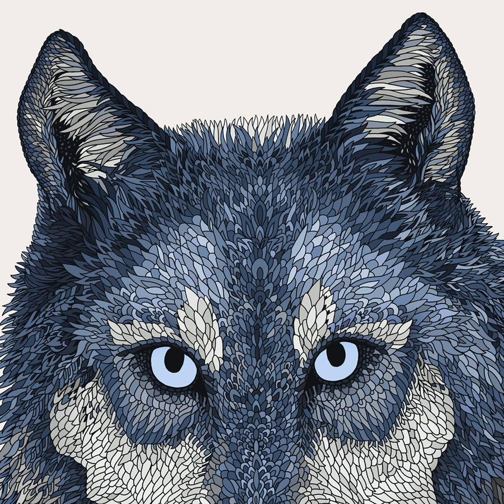Image of Winter Wolf