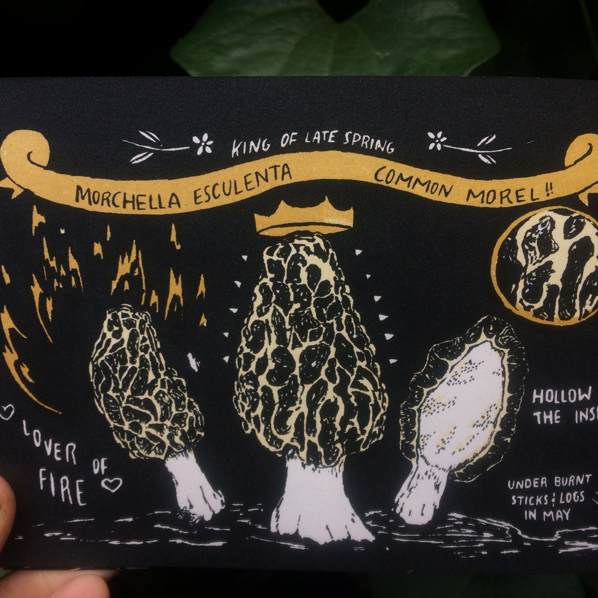 Image of Fungicopia Artist Book: Learning About Edible Mushrooms