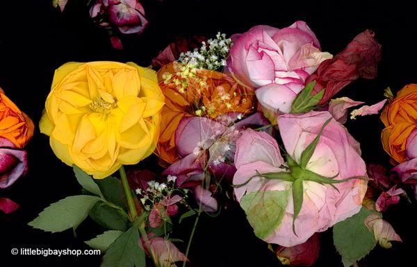 Image of Wild Bouquet