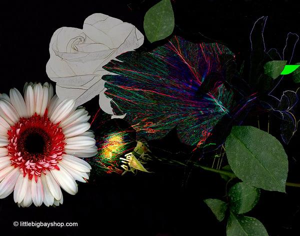 Image of White Rose